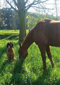Spezialtraining Hund und Pferd